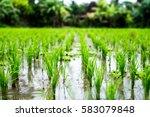 Rice Fields  Terraces ...