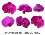 Pink Orchid Flower Isolated...