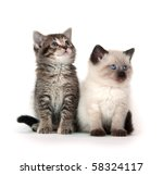 Stock photo two cute kittens on white background 58324117