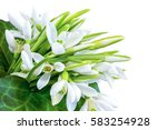 bouquet of snowdrops isolated...   Shutterstock . vector #583254928
