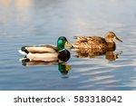birds and animals in wildlife... | Shutterstock . vector #583318042