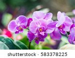 amazing pink orchid with copy... | Shutterstock . vector #583378225
