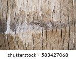 coconut tree texture | Shutterstock . vector #583427068