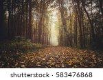 path through forest in autumn... | Shutterstock . vector #583476868