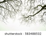 Plane Trees Branches In The...
