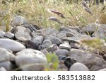 green vegetation pushing its... | Shutterstock . vector #583513882
