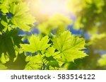 Spring Background With Fresh...