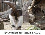 anteater | Shutterstock . vector #583557172