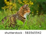 Cat Sitting In The Grass In Th...