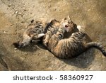 Stock photo playing kittens 58360927