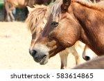 horse face | Shutterstock . vector #583614865