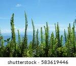fern on the sky | Shutterstock . vector #583619446
