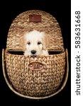 labradoodle puppy in a wicker... | Shutterstock . vector #583631668