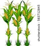 vector   ripe fresh yellow corn ... | Shutterstock .eps vector #583712845