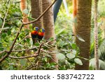 Colorful Parrot In Loro Park I...