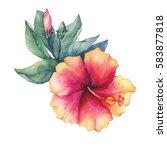 peach pink hibiscus flower.... | Shutterstock . vector #583877818