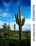 detail cactus cacti in arizona... | Shutterstock . vector #583888996