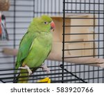 green parrot in cage | Shutterstock . vector #583920766