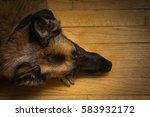 overhead shot of german... | Shutterstock . vector #583932172