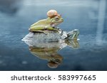 Snail  Frog  Turtle  Dumpy Frog ...