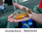 fish | Shutterstock . vector #58403434