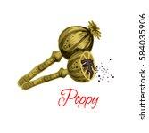 poppy capsule with seeds vector ... | Shutterstock .eps vector #584035906