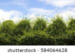 green trees bushes sky... | Shutterstock . vector #584064628