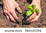 dirty and muddy of male hands... | Shutterstock . vector #584105296