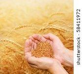 Hands Of The Grain Grower...