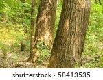 tree  oak  deciduous | Shutterstock . vector #58413535