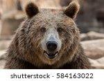eurasian brown bear  ursus... | Shutterstock . vector #584163022