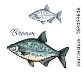 bream sketch vector fish.... | Shutterstock .eps vector #584194816