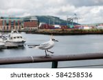 Seagull Perching At Harbor ...