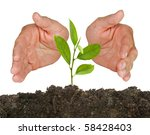 tree seedling protected by hands | Shutterstock . vector #58428403