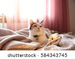 Stock photo image of cat relaxing on bed in the sunshine 584343745