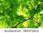 leaves of fresh green. leaves... | Shutterstock . vector #584372812