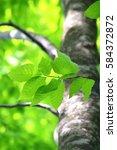 leaves of fresh green. leaves... | Shutterstock . vector #584372872