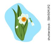 beautiful daffodils green... | Shutterstock .eps vector #584509192
