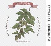 humulus lupulus aka common hop... | Shutterstock .eps vector #584541136