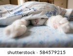 Stock photo cat sleeps under the blanket looks like making selfie 584579215