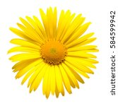 Yellow Daisy Isolated On A...