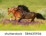 Two Horse With Long Mane Run...