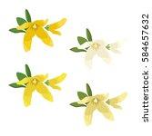 set of forsythia blossoms   Shutterstock .eps vector #584657632