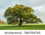 old oak tree in the meadow... | Shutterstock . vector #584704765