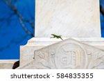 green anole lizard sits in the... | Shutterstock . vector #584835355
