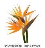 Bird Of Paradise Flowers...