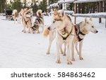 Siberian Huskies Spending Time...