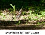 fieldfare  turdus pilaris in... | Shutterstock . vector #58492285