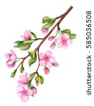 watercolor painting of blooming ... | Shutterstock . vector #585036508