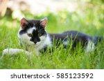 Cute Gray Cat Lying On Green...